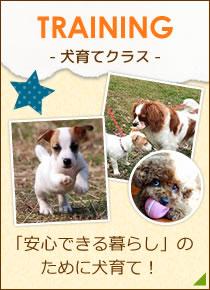 「安心できる暮らし」のために犬育て!