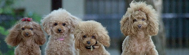 人も犬も、みんなが笑顔になれるサロンChienStyle